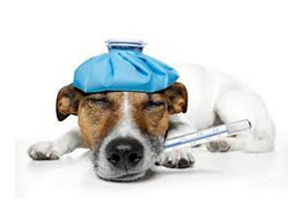 Sick Exams For Dogs