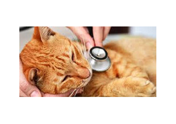 Wellness Exams For Cats