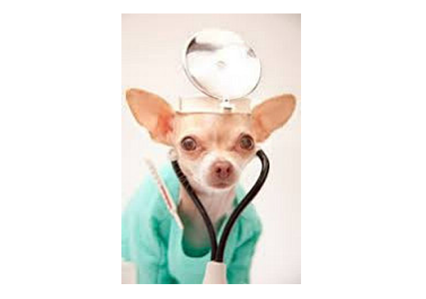 Wellness Exams For Dogs
